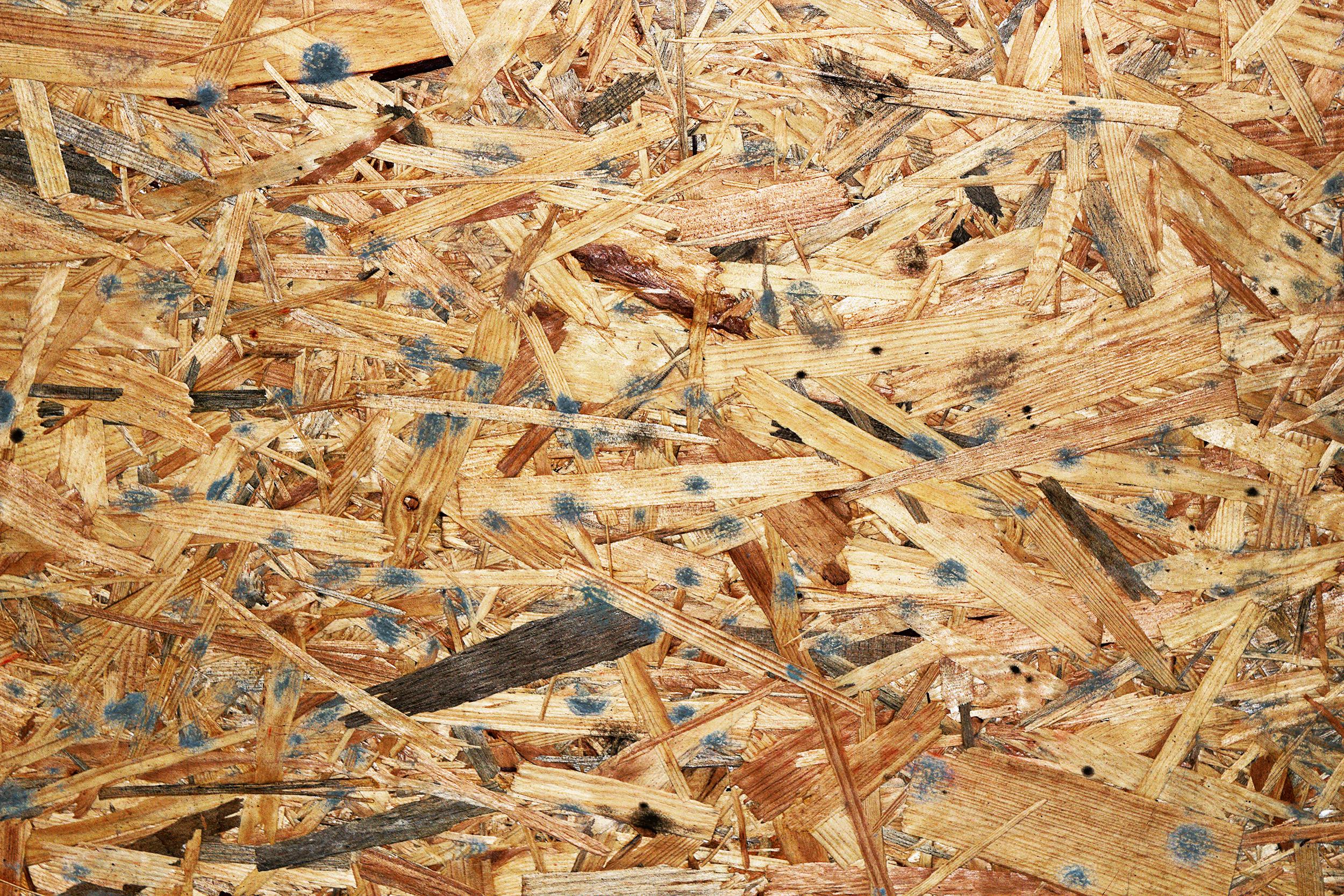 Skimmelsvamp som vokser på overflade af træ